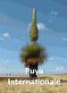 puya_internationale_site.png